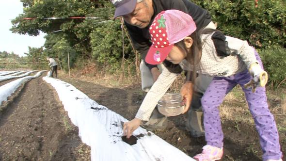 03.桜島大根の種まき、指宿のそら豆の植え付け