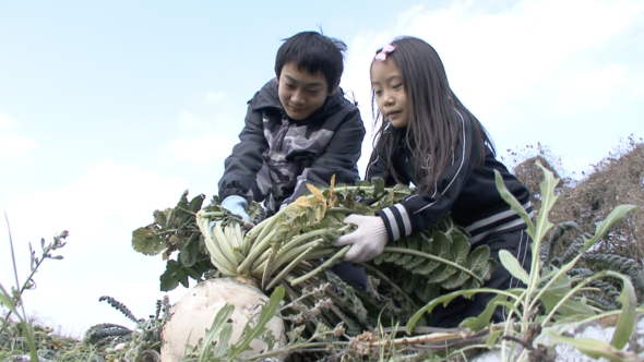 05.桜島大根の収穫