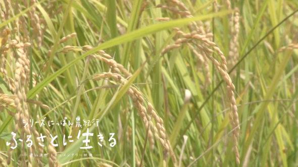 08.志摩市の稲刈り。美し国(うましくに)・三重のお米