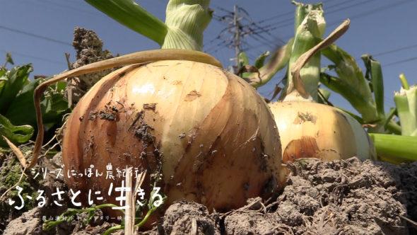 08.佐賀の春。タマネギの収穫と種レンコンの植え付け