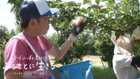 05.倉吉町、二十世紀梨の収穫