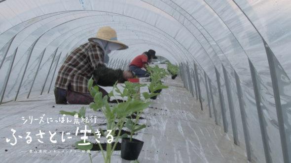 07.冬から春へ。スイカの定植と白ネギの収穫