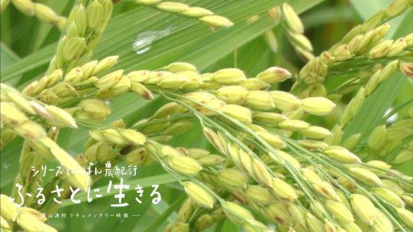 04.夏の田んぼ、育みの季節