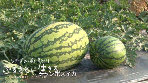 02.入善町の入善ジャンボ西瓜、杉沢の沢スギ