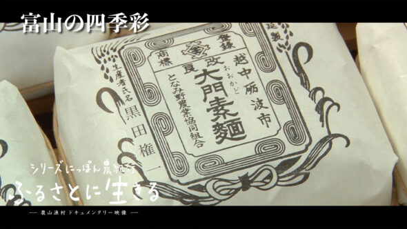04.砺波市の大門素麺。新湊漁港のホタルイカ